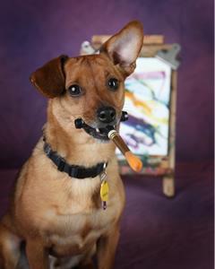 Dog Train Wilmington Nc Reviews